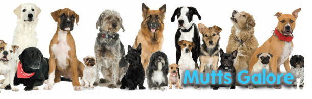 Mutts Galore Animal Rescue